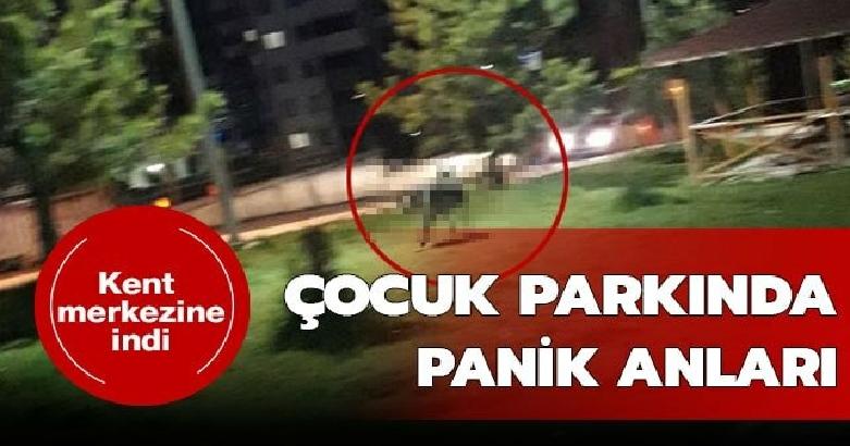 Çocuk parkında panik anları 2